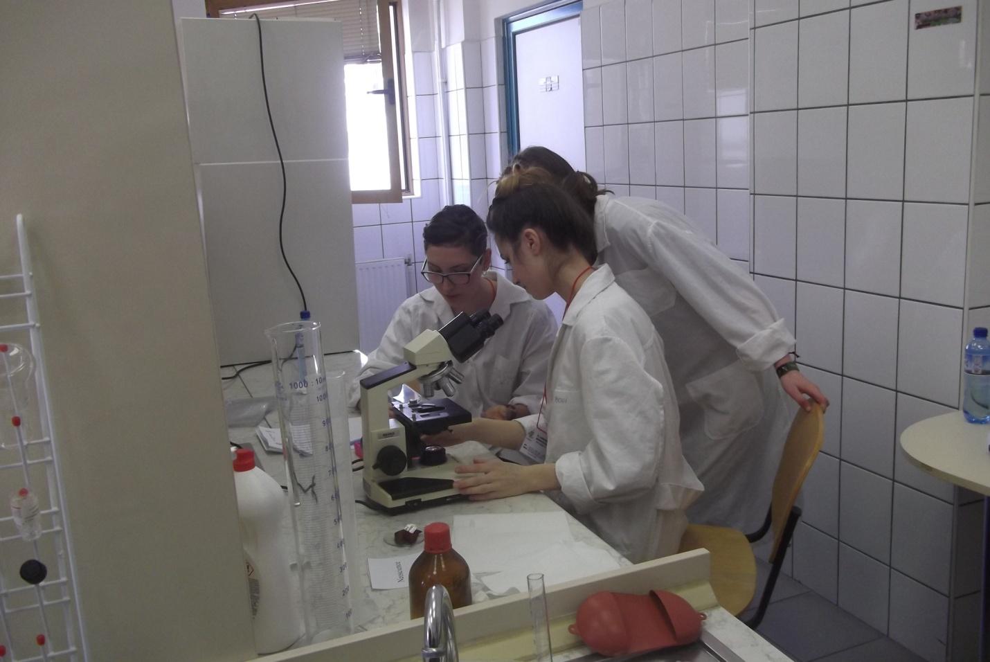 laborkukac4